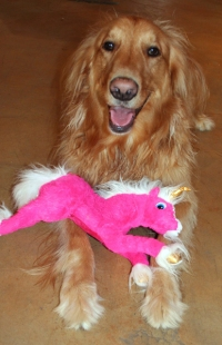 Toby and Pink Unicorn AKA Pony