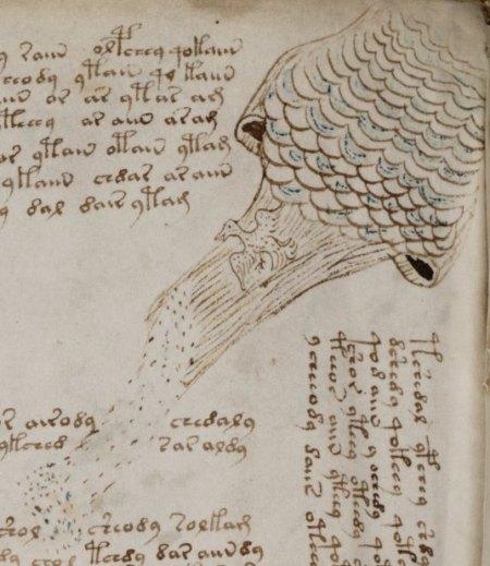 Voynich-Manuscript-3