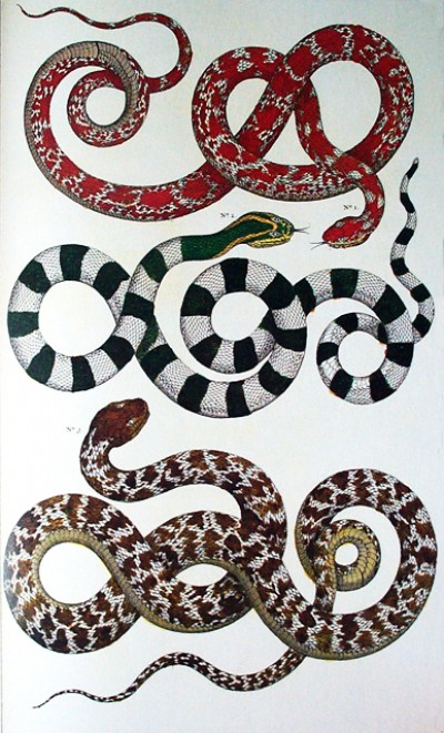 black-and-white-snakes_thumb