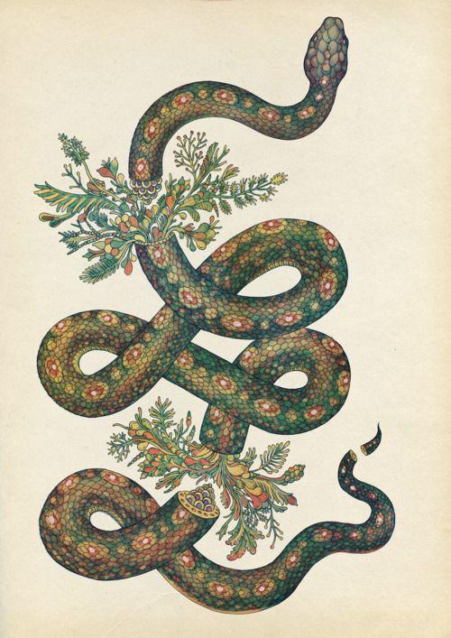 """Snake"", by Katie Scott"